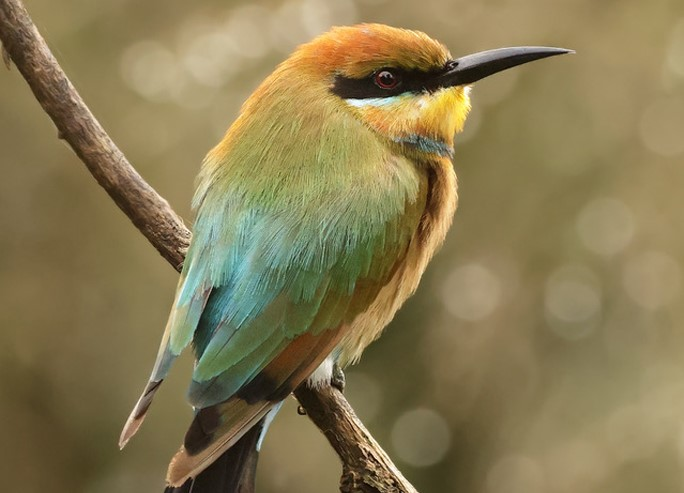 Bird sitting on a branch in the Daintree River